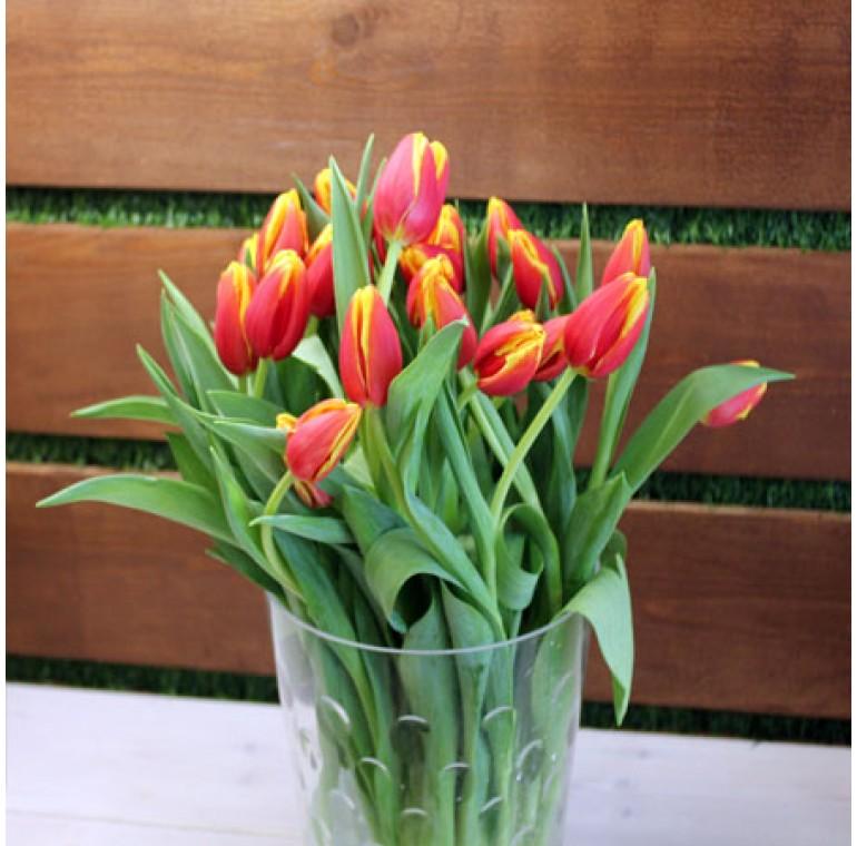 Свежие тюльпаны