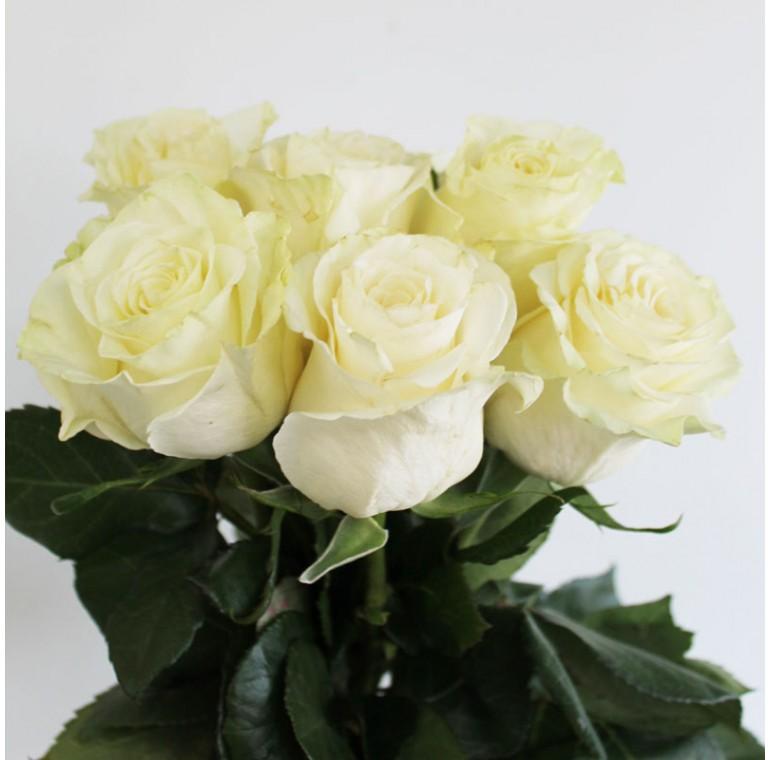 Роза Мандиаль 50см