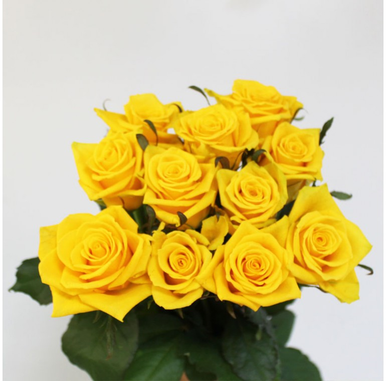 Роза Тара 70см.