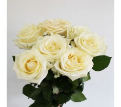 Роза Аваланж 50см
