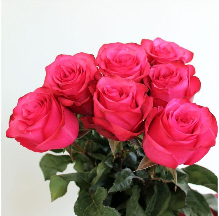 Роза Лола 60см.