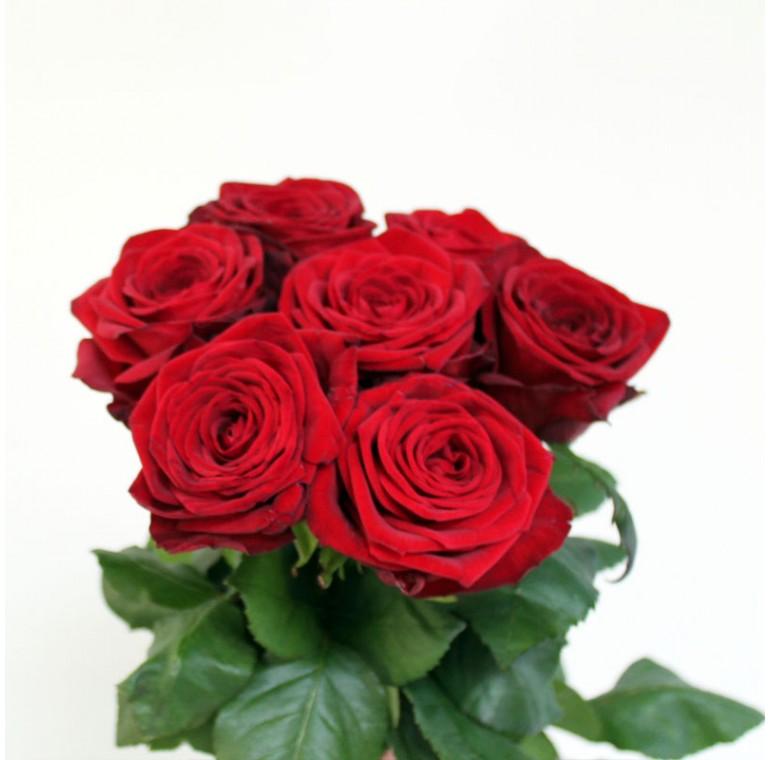 Роза Ред Наоми 70см