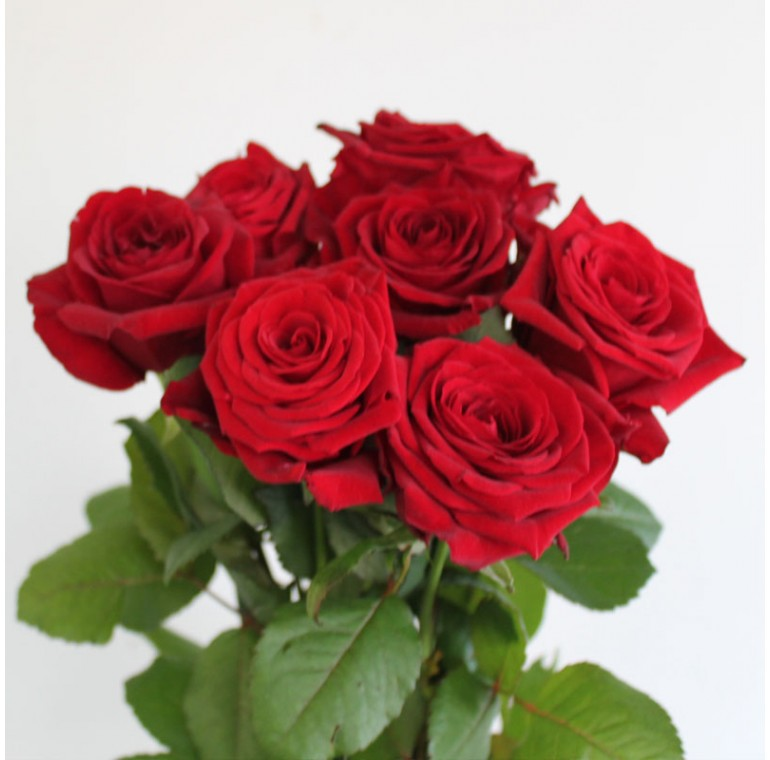 Роза Ред Наоми  50см