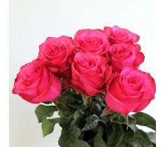 Роза Лола 70см.